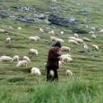 Is the LORD really your shepherd?
